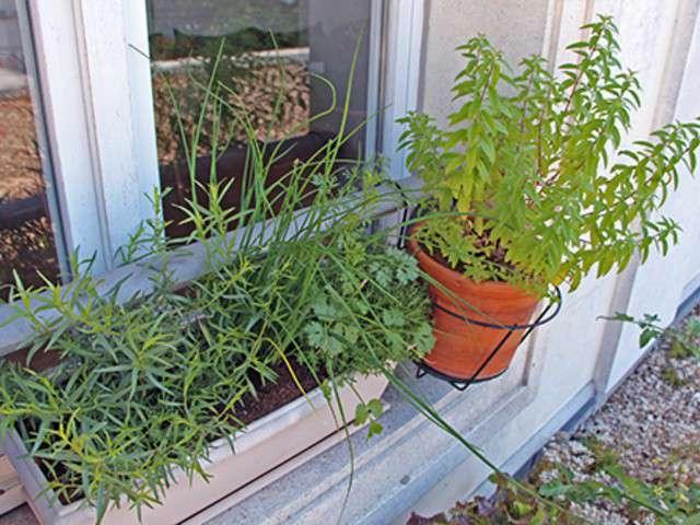 recettes de herbes aromatiques 3. Black Bedroom Furniture Sets. Home Design Ideas