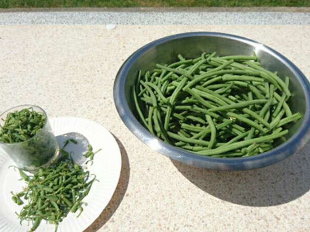 Recettes de cheztchoune - Congelation des haricots verts du jardin ...
