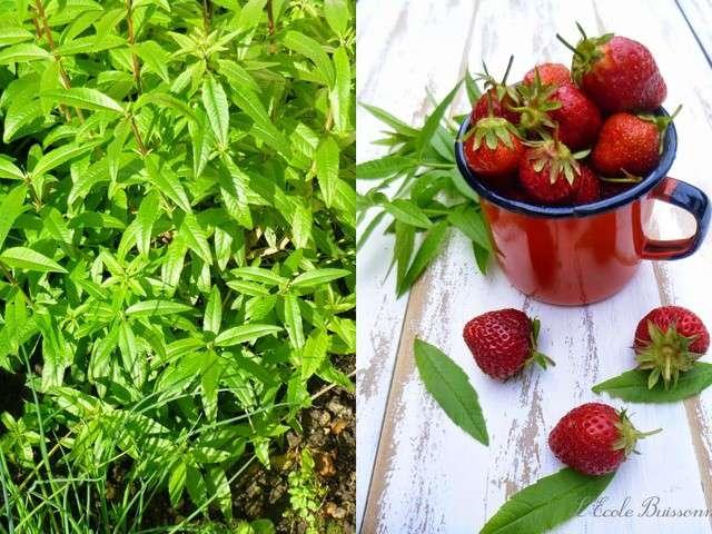 Recettes de defi ramene ta fraise de l 39 ecole buissonni re - Ramene ta fraise ...