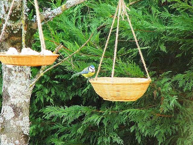 Recettes d 39 oiseaux de le carnet sur l 39 tag re bio et fait maison - Repulsif oiseaux fait maison ...