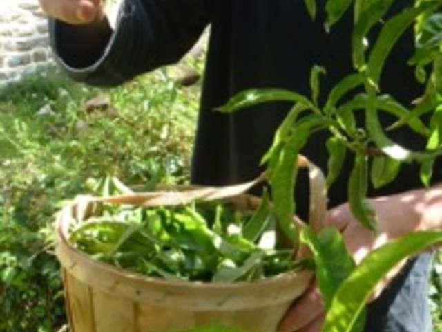 Recettes d 39 ap ro de le jardin de jenny for Feuille de zinc pas cher