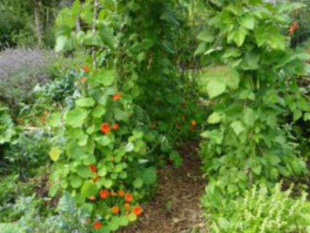 Recettes de haricot d 39 espagne - Culture du cresson de jardin ...