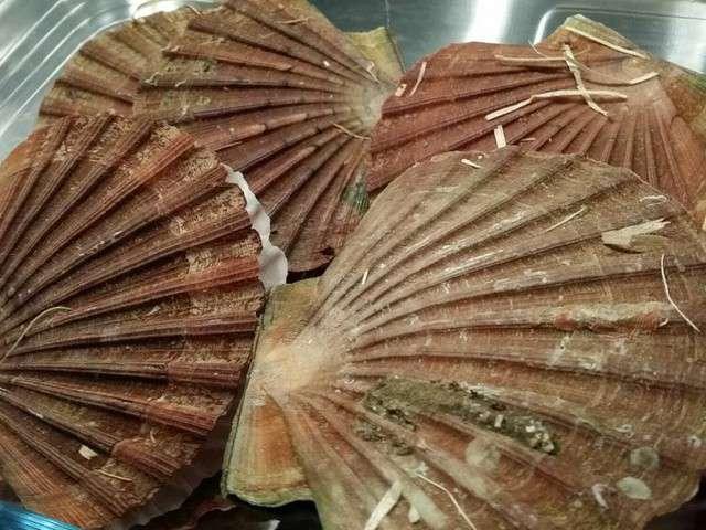 Recettes de coquilles saint jacques 2 - Cuisiner les coquilles saint jacques ...