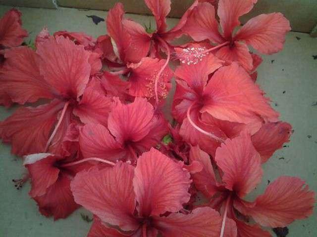 confiture hibiscus recette