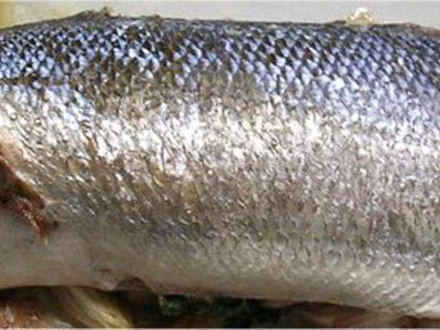 Les meilleures recettes de bar et poisson - Recette poisson grille au four ...
