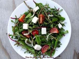Salade de pourpier