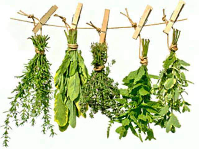 Recettes de cerfeuil et estragon for Plantas ornamentales mas comunes