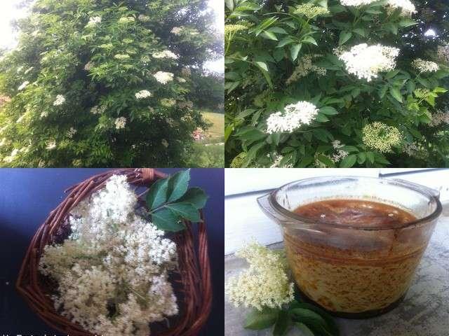 Recettes de cuisine des simples herbes aromatiques ou - Herbes aromatiques en cuisine ...